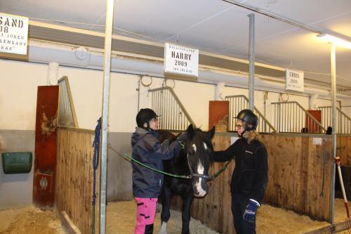 Arbetskamraterna Lena och Isak hjälps åt att sköta hästen Harry.